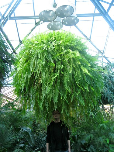 King Size Fern