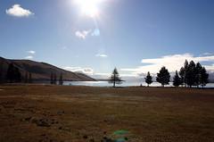 034 (thi.g) Tags: trees newzealand lake mountains thig tekapo thilogierschner