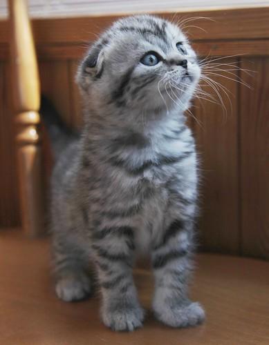 猫の人気品種&名前ランキング!