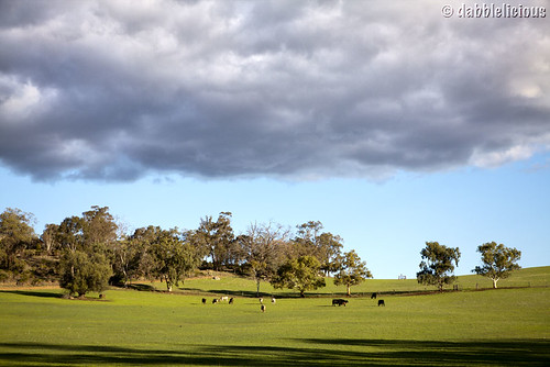 Of cows and clouds