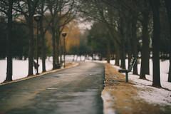 illusions[explored] (mariosworld343) Tags: park winter light snow love canon bench prime alone dof natural bokeh mark iii explore illusion 5d desolute explored canonef200mmf2lisusm ef200mmf2lisusm 5d3