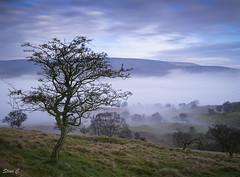 Edale Valley Mist (scon4061) Tags: edale mamtor derbyshire mist fujixt1 fuji14mmf28 ridge loosehill tree 10stopndfilter england uk peakdistrict