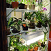 Orchid growing room