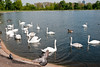 See im Hyde Park (jens.greitemann) Tags: england london see unitedkingdom urlaub hydepark vögel baum frühling frhling vgel london2009