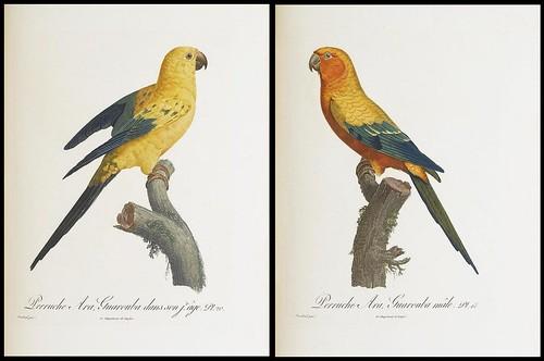 Histoire naturelle des perroquets by François Le Vaillant 1801-1805 (Sotheby's)