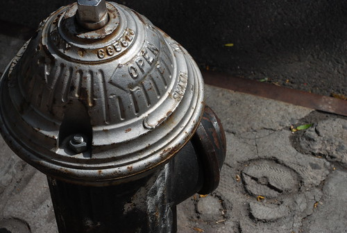 noticing fire hydrants