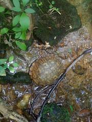 9 - Turtle