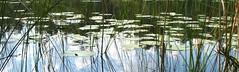 lake border (Vilseskogen) Tags: summer lake forest fishing sweden creative commons insects research sverige trout eskilstuna entomology forskning trehrningen vilseskogen entomologisk
