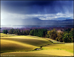 the light before the storm (Daniel Murray (southnz)) Tags: road light shadow newzealand cloud sun storm tree green field rain forest dark landscape shower pond scenery hill pasture nz southisland burst paddock southnz