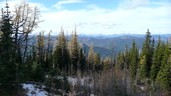 Picture 335 (koribrus) Tags: tree fall larch