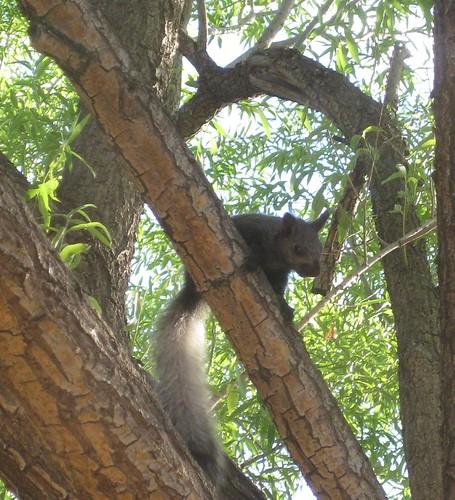 Weird squirrel 003