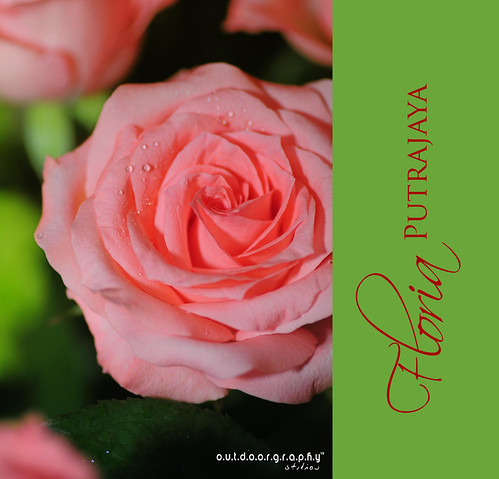 Pink Rose @ Floria (by Sir Mart Outdoorgraphy™)