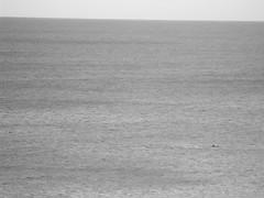 DSCF0852_1 (Stinky Cha Cha Bingo) Tags: whales loungeroom lorne