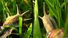 Snaillife (Sternschnuppes Welt) Tags: macro nature snail schnecke weinbergschnecke anawesomeshot
