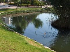 Golondrinas (Javier Garcia Alarcon) Tags: lago estanque golondrinas golondrina pescola marjal