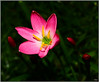 stay close to you (Lohb) Tags: flower 1740 canon40d