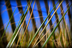 Going To The Beach (Rokudan) Tags: blue sky brown ontario green beach grass yellow fence reeds sand brighton grasses endofsummer presquile rokudan loverofnature naturewatching naturalexcellence screamofthephotographer thefeelofphotography sheyan winksplace fencefriday