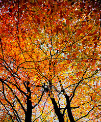 LAST AUTUMN (with a nod to GUSTAV KLIMT)explore (kenny barker) Tags: explore tistheseason anawesomeshot impressedbeauty diamondclassphotographer flickrdiamond goldstaraward rubyphotographer saariysqualitypictures absolutelyperrrfect flickrvault trolledproud kikasfriends