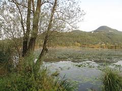 Lago di Fimon. Vicenza (sangiopanza2000) Tags: italy lake tree water lago italia natura albero acqua vicenza veneto sangiopanza fimon