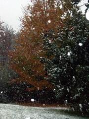 Snow_101809c