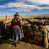 Par soucis d'économie, les animaux de trois familles sont regroupés ici (Crucero, Puno, Pérou, août 2009)