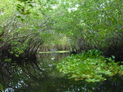 The mangroves.  I have to say I love this photo.