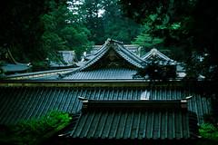 98 (JonathanPuntervold) Tags: japan forest canon jonathan mark photoblog ii  5d 40mm nikko tochigi voigtlnder toshogu    f20 ultron   puntervold jonathanpuntervold