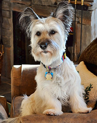 nick whitehawk ranch california llgorman pet art portraits