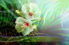 2925 Florales (Supply Impresin Digital) Tags: flowers flores beautiful rose deco rosas lindas follaje margaritas girasol supply lilas motivos florales supplydeco