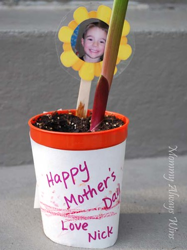 Mother's Day plant (close up)