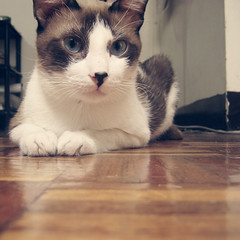 Huckle. (ranchesca) Tags: cat whiskers meow huckle