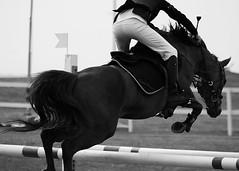 show jumping (TheCokeBadger) Tags: show city horse white black cup canon jumping may niklas pony malmö 2009 hsbc mcro ribersborg ponny 450d canonef75300mmf456iii sveland ausenius banhoppning