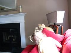 Clara Ann investigating Jasper