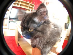 kitty (chacka) Tags: cat canon is kitty fisheye katze s5 fischauge canons5is