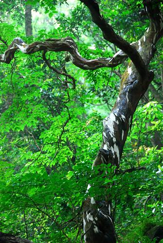 很漂亮的樹