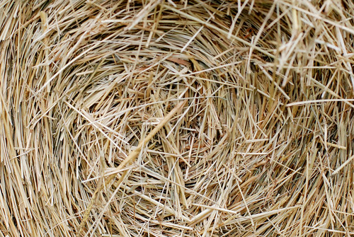 center of a bale of hay