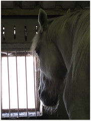 Retired (Julka2009...(mostly off)) Tags: old light horses white window mood retired stable
