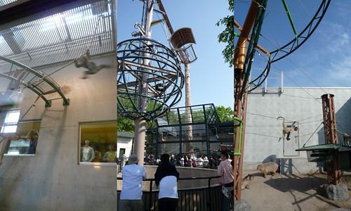 你拍攝的 旭山動物園5。