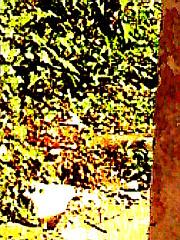 nature aux gros pixels (alainalele) Tags: camera nature toy graffiti zoom internet creative commons pic bienvenue numrique licence presse bloggeur paternit