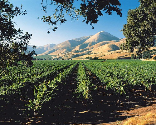 Bien Nacido Vineyards in the Santa Maria Valley Wine Country