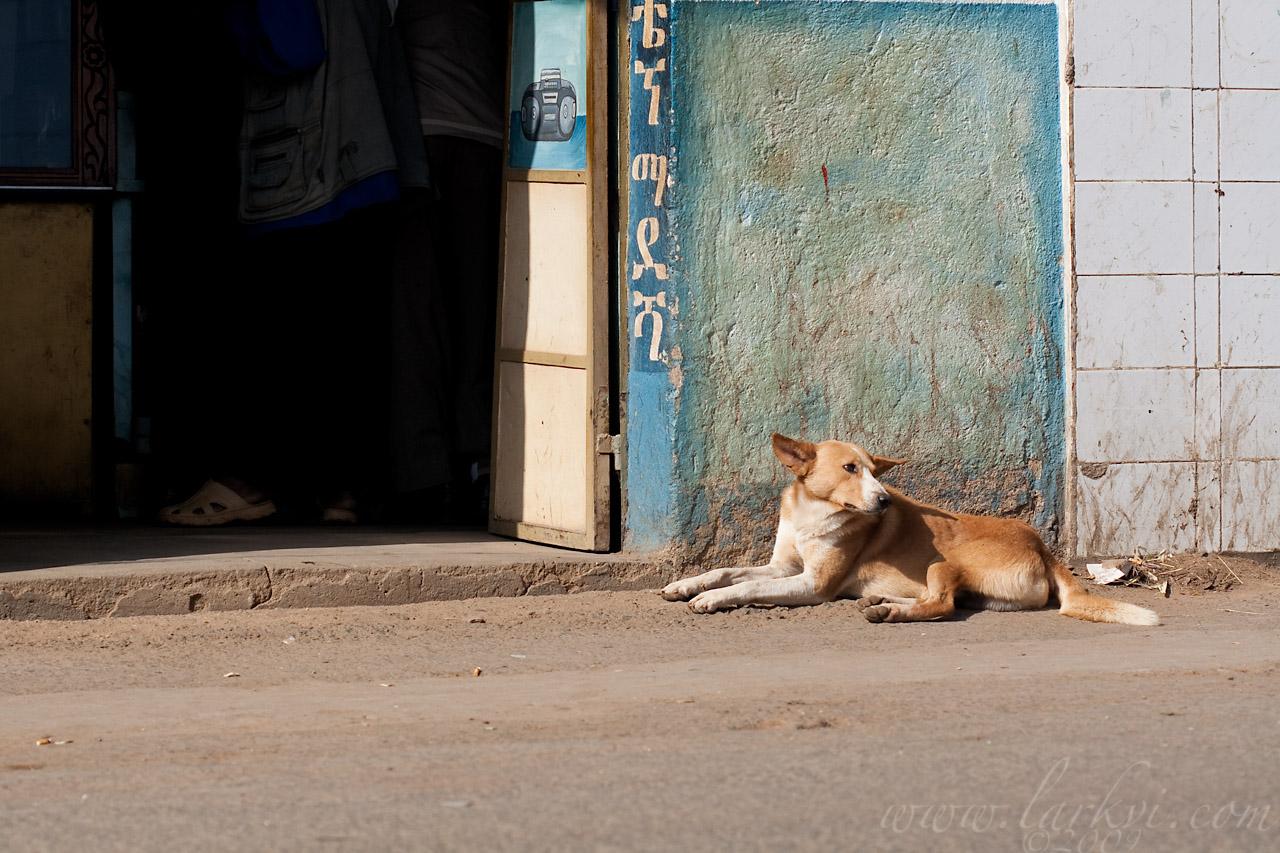 Dog #1(a), Harar, Ethiopia, August 2009