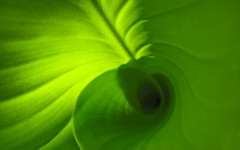 Canna (monteregina) Tags: desktop wallpaper plants canada abstract macro green texture nature colors leaves lines closeup design leaf flora pattern natural spirals background widescreen patterns details natur shapes structures curls vert foliage textures qubec creativecommons tropical designs swirls abstraction veins wallpapers plantae minimalist canna feuilles plantes flore naturelle abstractions 1920x1200 1610 1440x900 abstrait abstractnature cannalily dtails formes cannaceae 1680x1050 feuillage 1280x800 byncsa monteregina cannacea cannaces