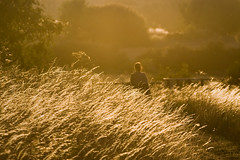 O Fim do Vero [The End of Summer] (Jim Skea) Tags: inglaterra sunlight grass suffolk celina capim 2009 ipswich sigma70300mmf456apodgmacro fujifilmfinepixs5pro