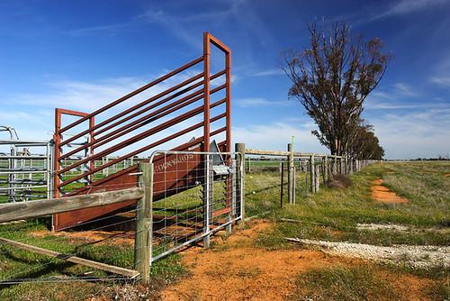 Mathoura, New South Wales, Australia, The Long Paddock   IMG_5452_Mathoura