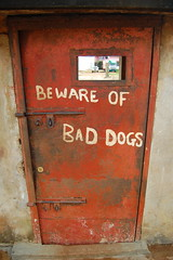Bad dogs (begin again) Tags: sierraleone freetown