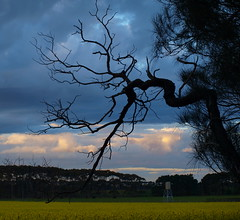 Tree's Reaching Out (angeliou56) Tags: sky tree nature beauty skyline rural spring branch country scarey land canola geelong swanbay bellarine