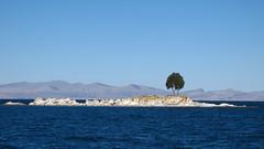 Lone Tree (itinerantlondoner) Tags: laketiticaca titicaca southamerica bolivia copacabana