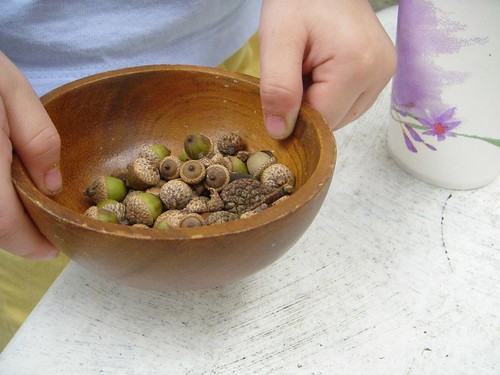 acorn collecting