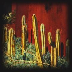 cacti (lavagirl66) Tags: texture cacti garden square grunge pottingshed francesvaritellis
