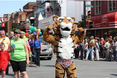 Tiger on Parade